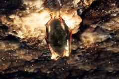 Bat. In Mlynky cave Ukraine Stock Photos
