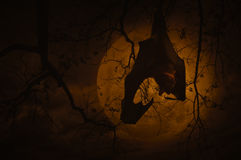 Bat scream and hang on dead tree over moon and cloudy sky, Spook Stock Images