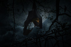 Bat scream and hang on dead tree over old fence, crow, moon and Stock Photography