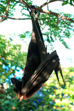 Bat. Side view Stock Photo