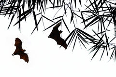Bat silhouettes with bamboo leave Stock Photos
