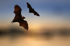 Bat silhouettes with colorful lighting - Halloween festival Stock Photos