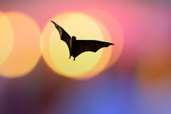 Bat silhouettes with colorful lighting - Halloween festival Royalty Free Stock Photo