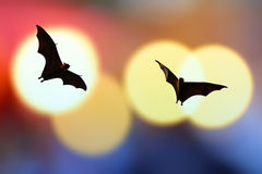Bat silhouettes with colorful lighting - Halloween festival Royalty Free Stock Images
