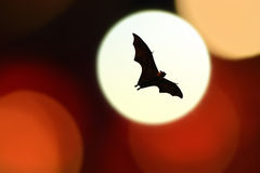 Bat silhouettes with colorful lighting - Halloween festival.  Stock Photography