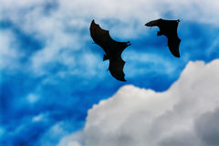 Bat silhouettes with colorful lighting - Halloween festival Stock Photography