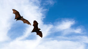 Bat silhouettes with colorful lighting - Halloween festival Stock Image