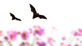 Bat silhouettes flying and flower Royalty Free Stock Photos