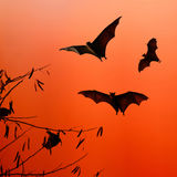Bat silhouettes flying on isolate background - Halloween festiva Stock Photo