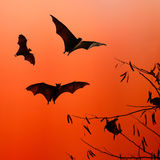 Bat silhouettes flying on isolate background - Halloween festiva Stock Image
