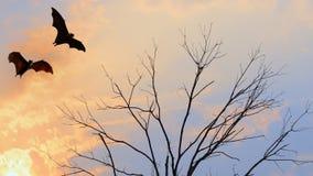 Bat silhouettes flying on isolate background - Halloween festiva. L Royalty Free Stock Photo