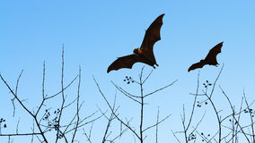 Bat silhouettes flying on isolate background - Halloween festiva Stock Photos