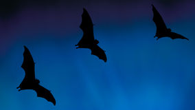 Bat silhouettes flying in the sky - Halloween festival Stock Photography