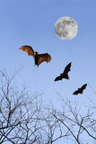 Bat silhouettes with full moon - Halloween festival Royalty Free Stock Image