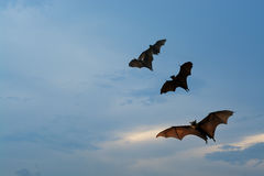 Bat silhouettes with sunset lighting - Halloween festival Stock Photography