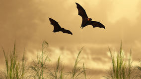 Bat silhouettes in sunset time Royalty Free Stock Images