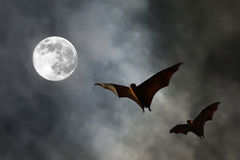 Bat silhouettes with super moon - Halloween festival Stock Image