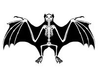 Bat skeleton. Detailed and accurate illustration of bat skeleton royalty free illustration