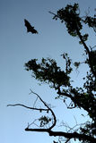Bat on the sky. The bat on the sky in the fores Stock Photography