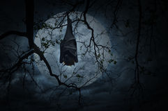 Bat sleep and hang on dead tree over moon and cloudy sky, Spooky Royalty Free Stock Images