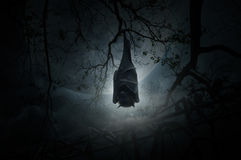 Bat sleep and hang on dead tree over old fence, moon and cloudy Stock Photo