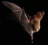 Bat still stock photos