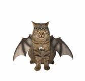 The bat -  vampire - cat. Royalty Free Stock Images
