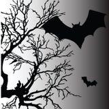 Bat vector silhouette illustration Stock Image