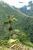 Batad-Feld-Terrassen - Philippinen stockbilder