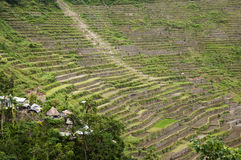 Batad Field Terraces - Philippines Royalty Free Stock Photo