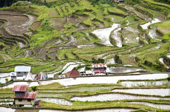 Batad Field Terraces - Philippines Stock Photos
