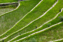 Batad rice field terraces, Ifugao province, Banaue, Philippines Royalty Free Stock Photo