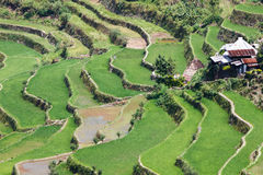 Batad rice field terraces,Ifugao province, Banaue, Philippines Stock Images