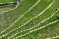 Batad rice field terraces in Ifugao province, Banaue, Philippines Royalty Free Stock Images