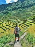 Batad Rice Terraces Stock Photography