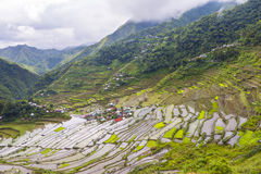 Batad Rice Terraces Philippines Royalty Free Stock Photography