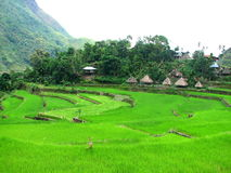 Batad Rice Terraces Village 2. This is a shot of the native huts along the rice terraces of Batad, Banaue, Ifugao, Philippines Stock Photography