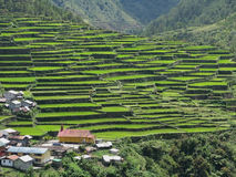Batad village. High angle shot of a famous Batad village with the rice terraced fields in Amphitheater shape - Unesco World heritage list. Batad. Philippines Stock Image