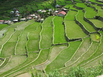 Batad village. High angle shot of a famous Batad village with the rice terraced fields in Amphitheater shape - Unesco World heritage list. Batad. Philippines Royalty Free Stock Photos