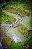 batadworkers ifugao irlandczyków śliwek ryż pracownicy Obrazy Royalty Free