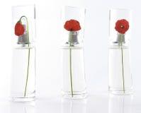 Batalha de Parfume Imagens de Stock