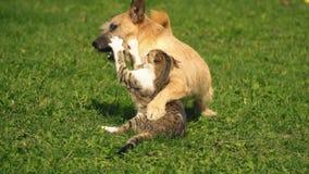 A batalha de um cão e de um gato video estoque