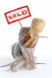 Batalhas dos bens imobiliários foto de stock