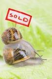 Batalhas dos bens imobiliários fotografia de stock