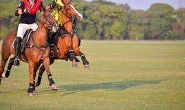 Batalla de Polo Player del caballo en partido imagen de archivo libre de regalías
