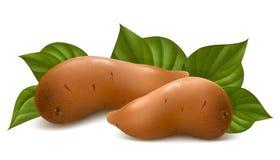 Batata doce com folhas. Imagens de Stock Royalty Free
