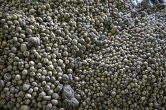 'batata doce' do Dioscorea Fotografia de Stock Royalty Free