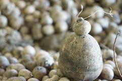 'batata doce' do Dioscorea Imagens de Stock