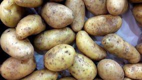 Batata Solanum Tuberosum Imagens de Stock Royalty Free