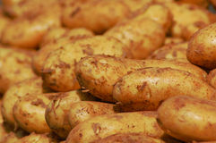 Batatas Imagens de Stock